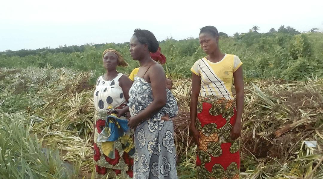 Agroécologie au Bénin
