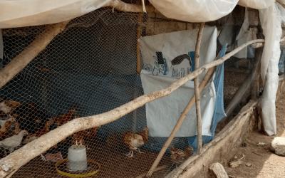 Formation des acteurs de la filière avicole